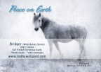 Christmas Cards … Bridger, Wild Horse Edition