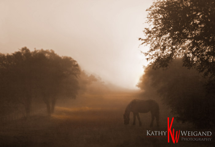 Fresian in Fog