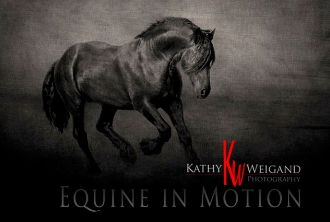 Title: Equine In Motion (text & logo is for display only & not on original print)