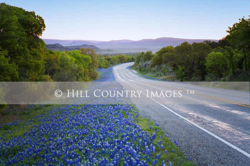 bluebonnet sightings 2014 in texas hill country | Fredericksburg Texas ...
