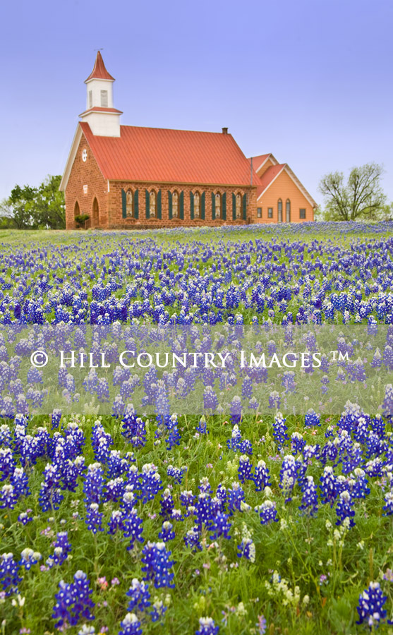 Texas Hill Country Stock Images, Bluebonnets, Wildflowers, Digital ...
