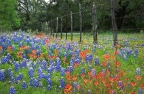 Gearing up for Bluebonnet Season 2014…  Spotting & Searching for Texas Hill Country Bluebonnet Roads to create Wildflower Prints