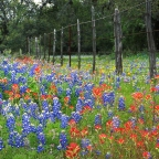 2014 Texas Hill Country Bluebonnet Sightings Hill