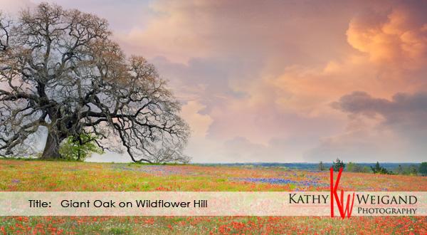 Giant Oak on Wildflower Hill