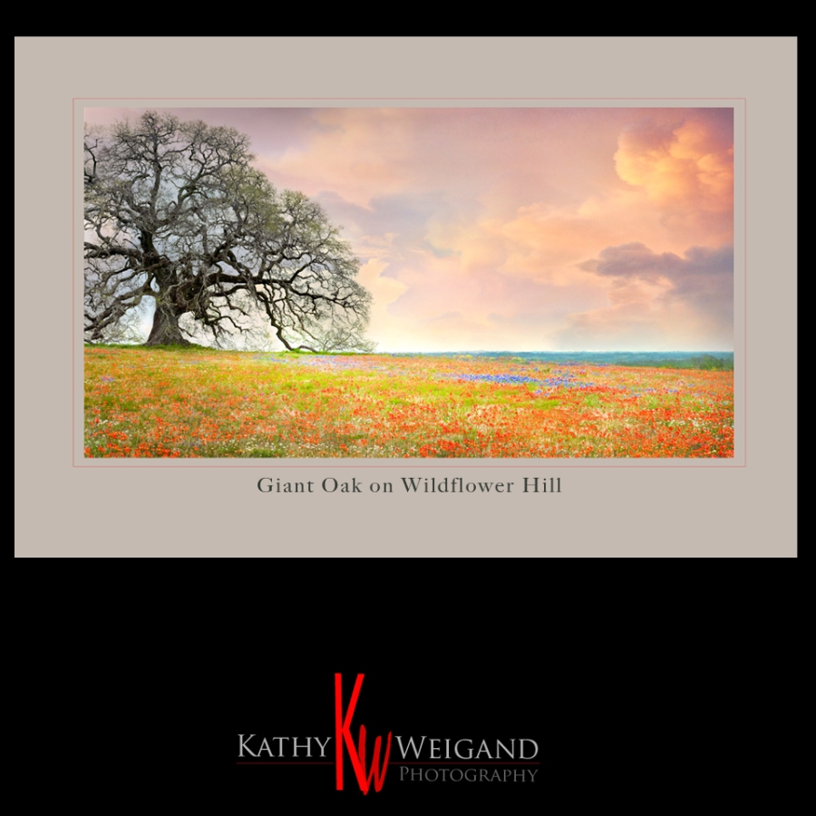 Giant Oak_WildflowerHill_small