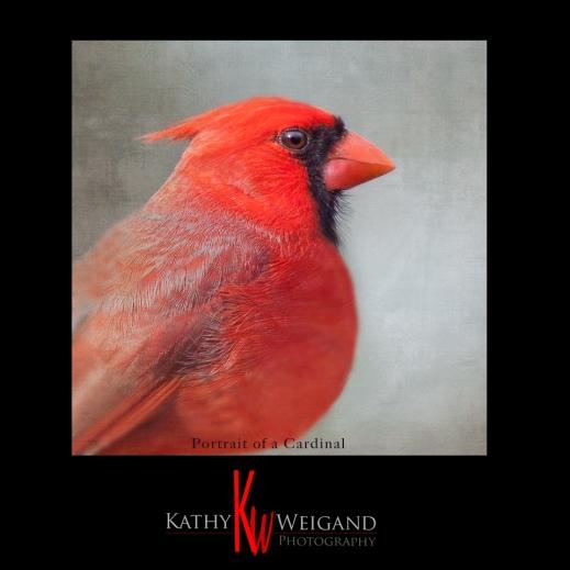 Portrait_Cardinal_small