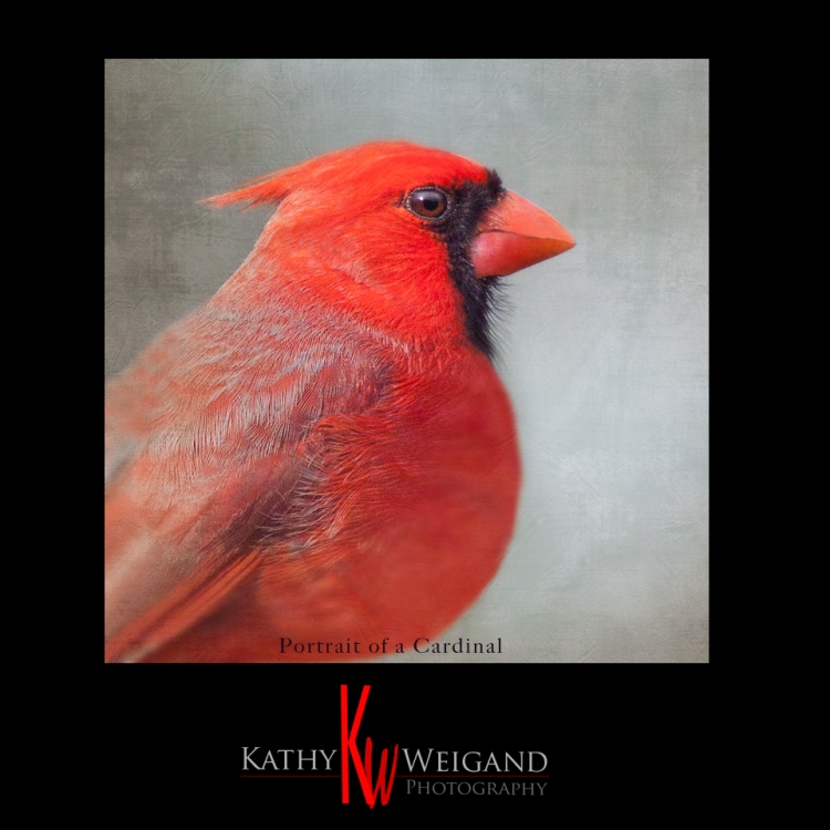 Portrait_Cardinal_small