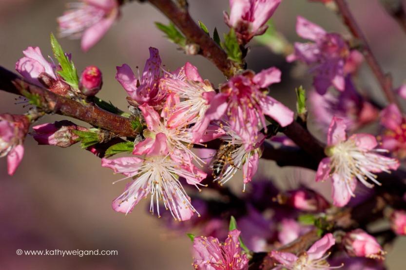 blooms0130