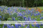 The Hill Country's Bluebonnet Trail  – Fredericksburg, Mason, & Llano.