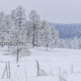 Near Cloudcroft New Mexico