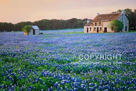 Bluebonnet Farm