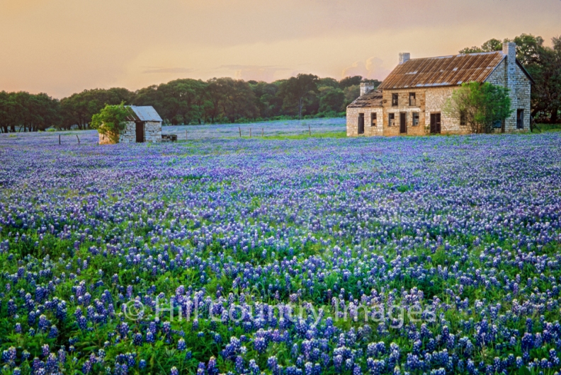 Bluebonnet Farm