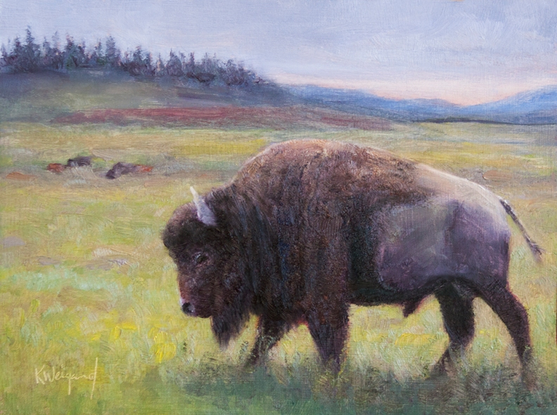 Yellowstone_Bison