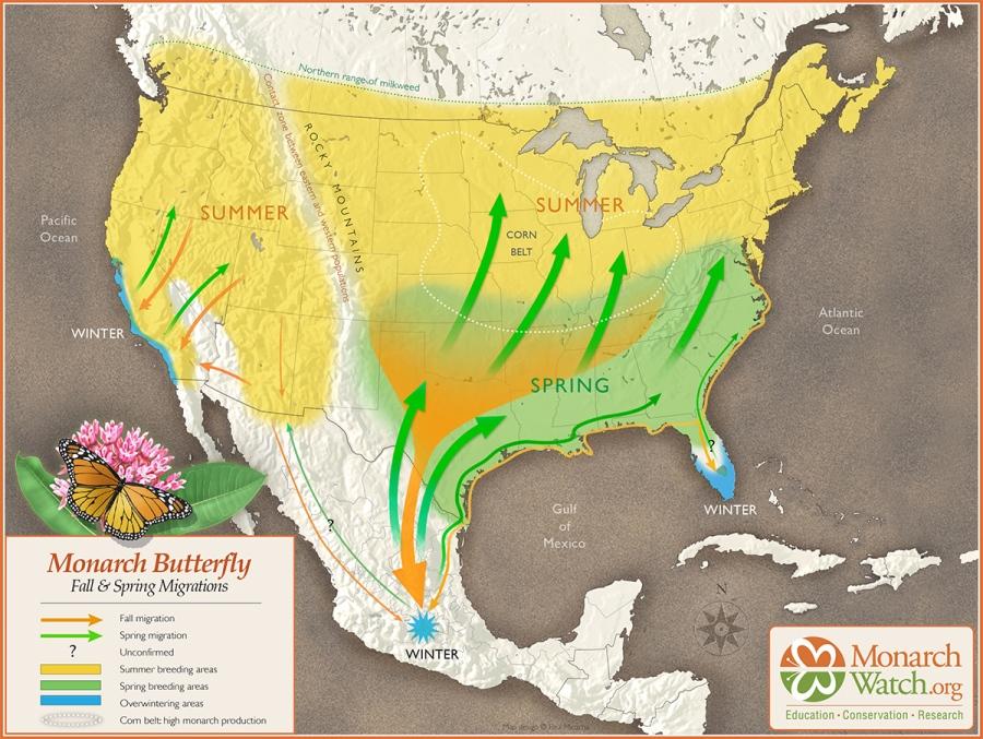 monarchwatch-map-1200x903.jpg